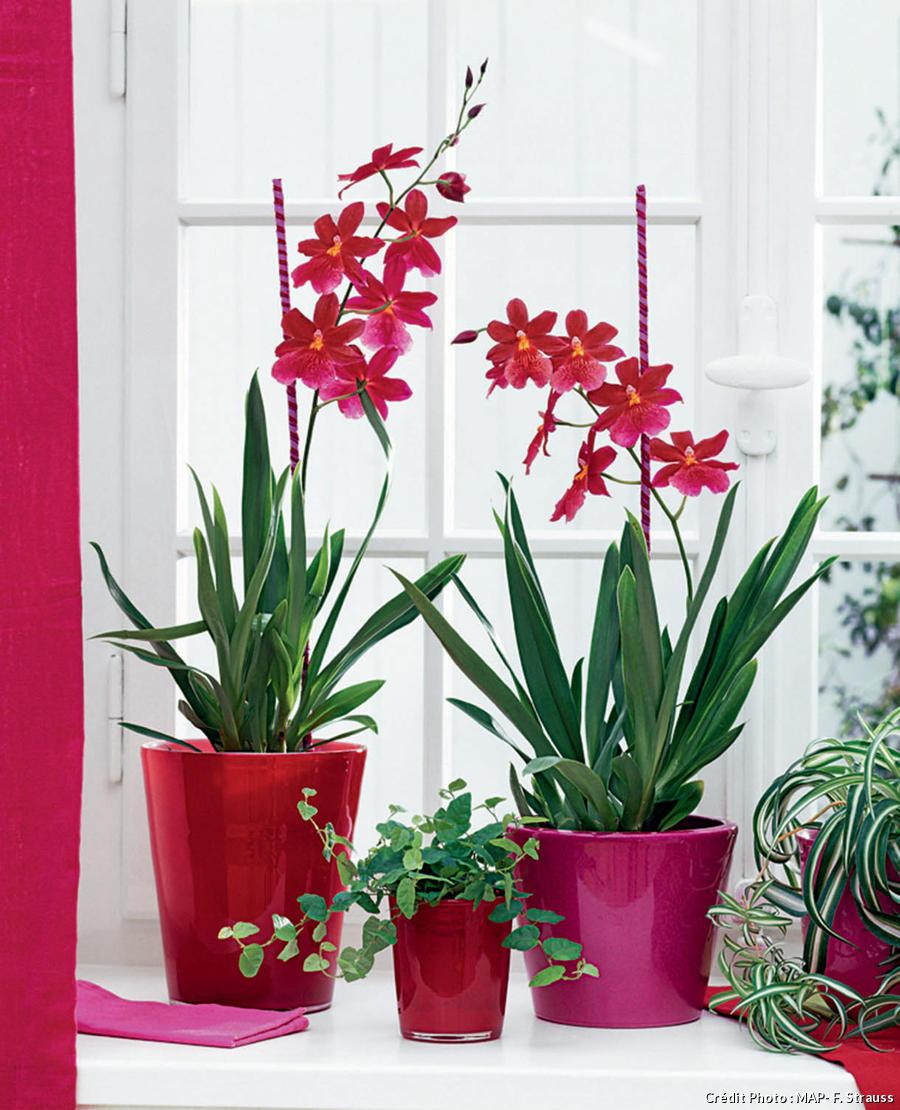 Le bon éclairage pour une plante d'intérieur