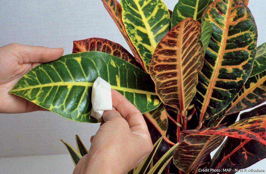 Nettoyer ses plantes d'intérieur