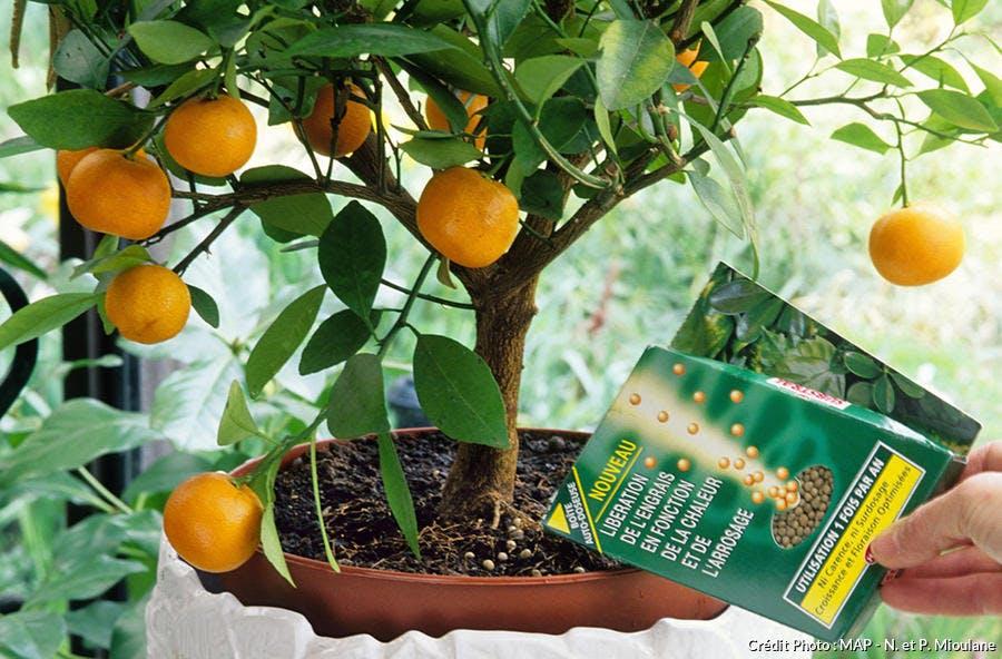 Nourrir ses plantes d'intérieur
