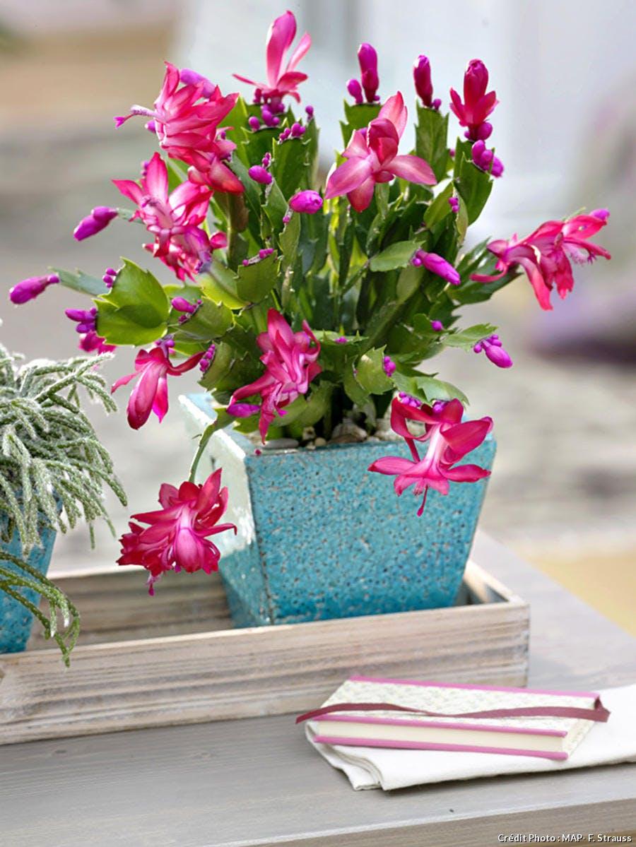 Mise au repos des plantes d'intérieur