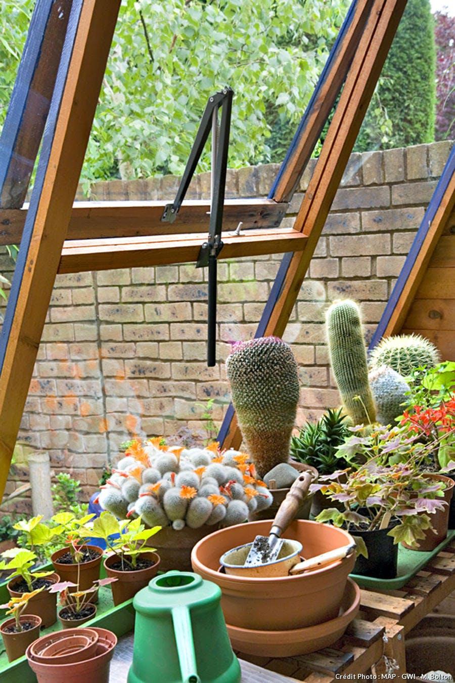 Plantes d'intérieur dans une serre
