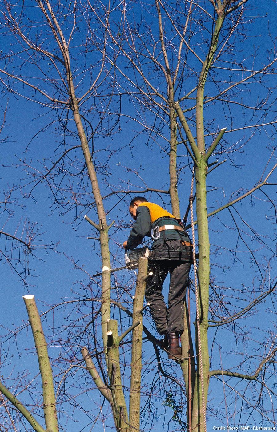 Tailler la tête d'un arbre