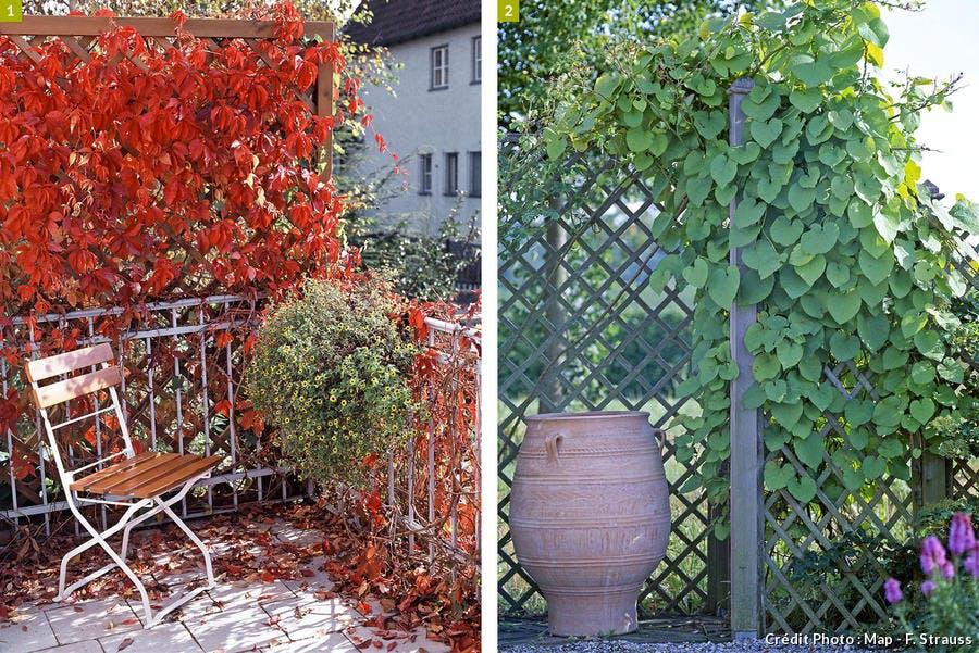 Brise vue feuilles rouges