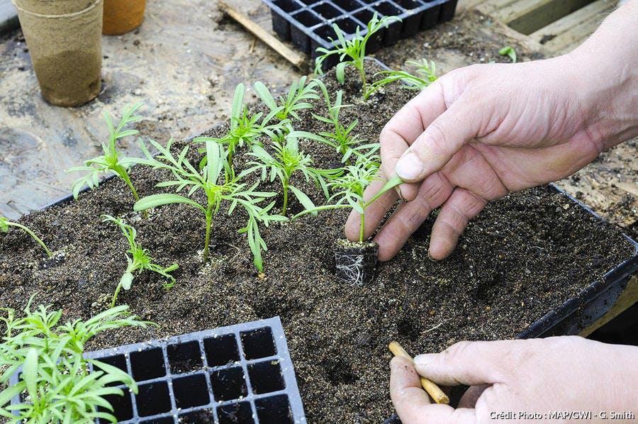 Jardiner avec la Lune au mois de mai