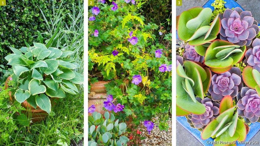 Jardinière efficace, sauvage et vintage