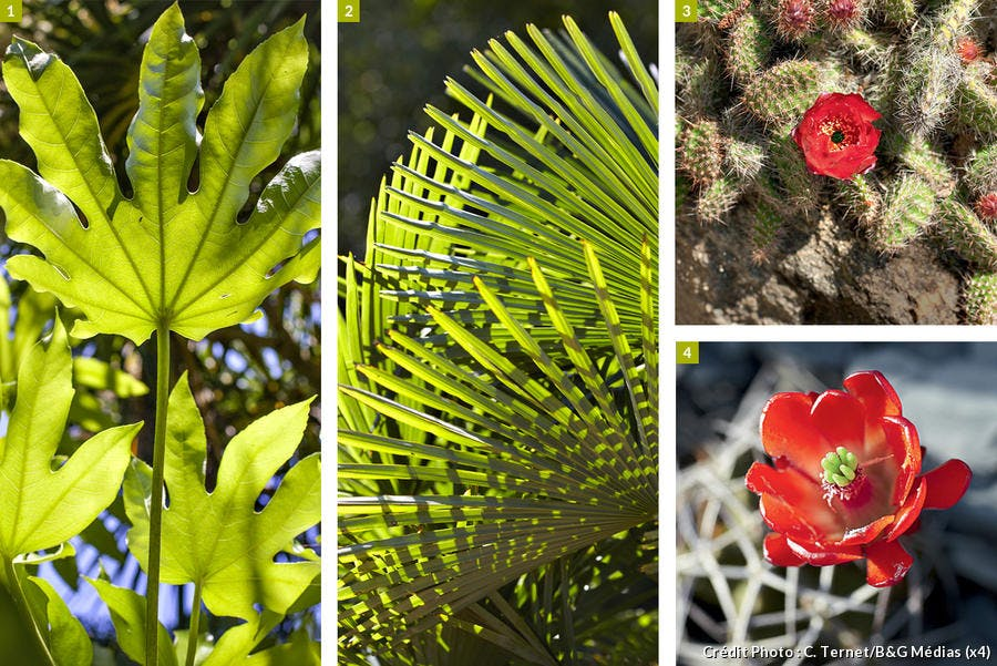 Cactus et feuillées