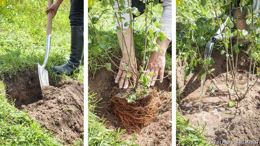 Les étapes pour planter sur un talus