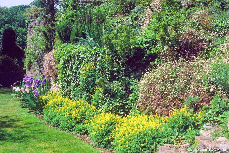 Plante et fleur sur un talus