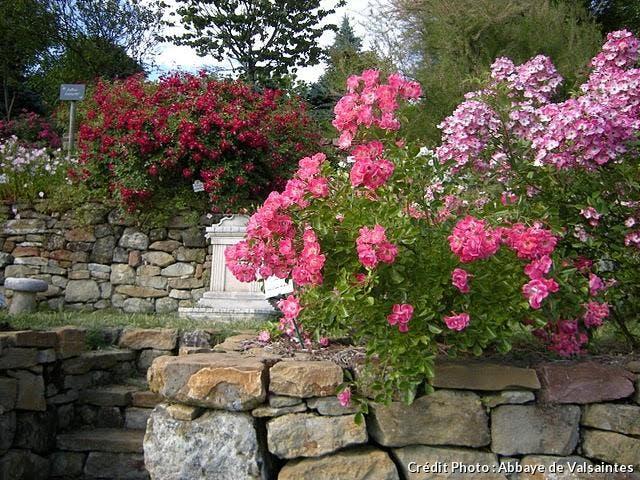 dj_abbaye-en-roses-1.jpg