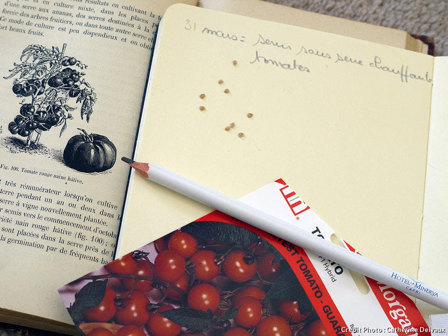Note pour semis de tomates