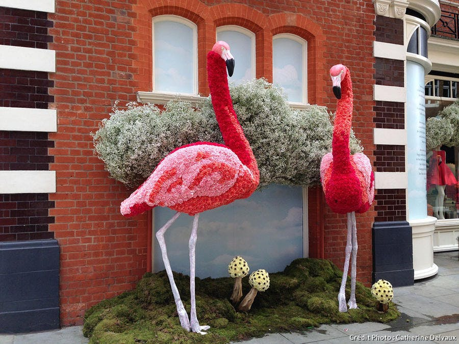 Chelsea flamand rose