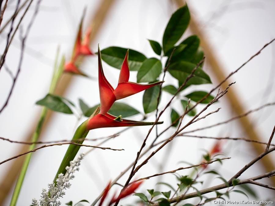 dj_floralies-gand-ikebana-karin-borghouts.jpg