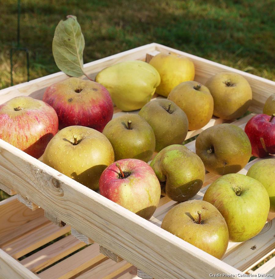 Conservation des fruits au cellier