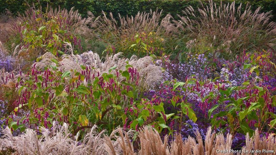 dj_jardin-plume2.jpg