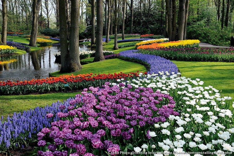 Parc de Keukenhof aux Pays-Bas