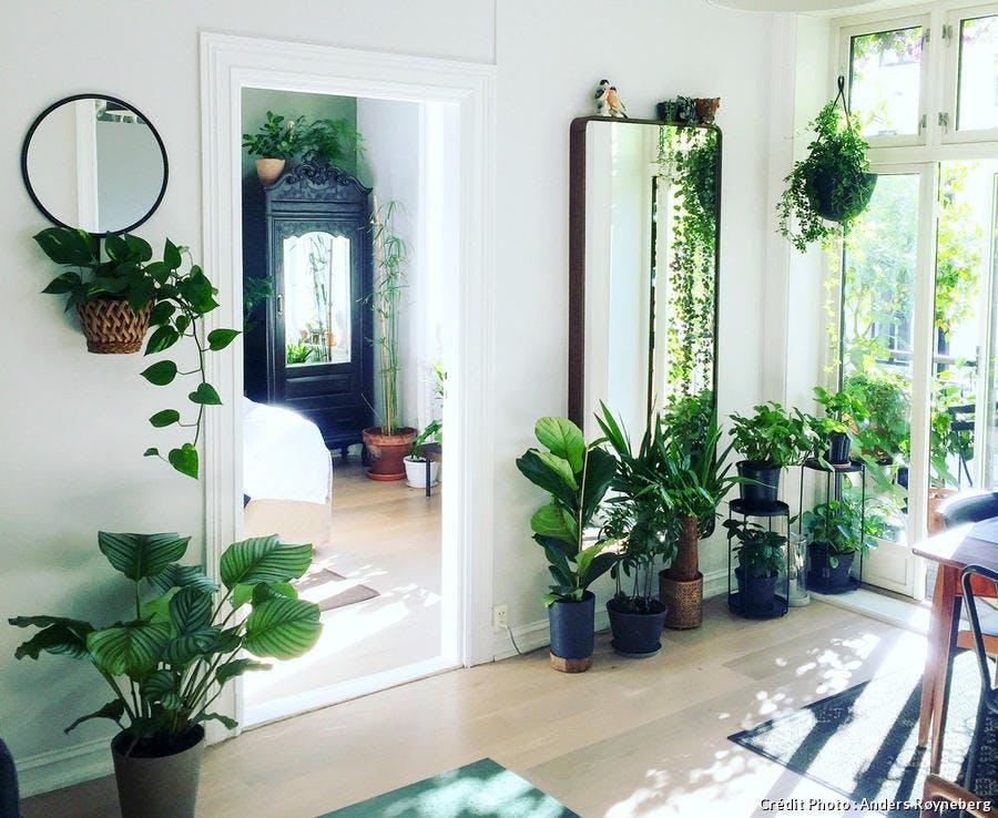 Les plantes d'intérieur devant les grandes fenêtres profitent de la lumière.