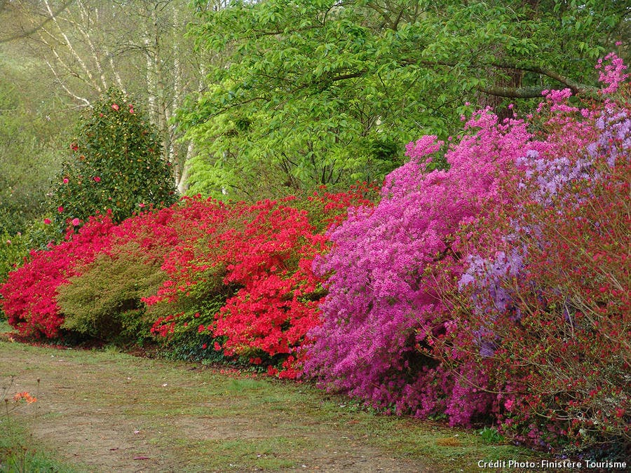 Parc botanique de Cornouaille - Combrit