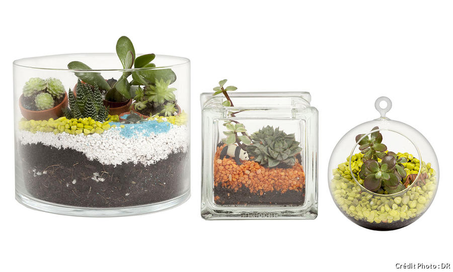 Les 10 règles pour un terrarium réussi - Détente Jardin