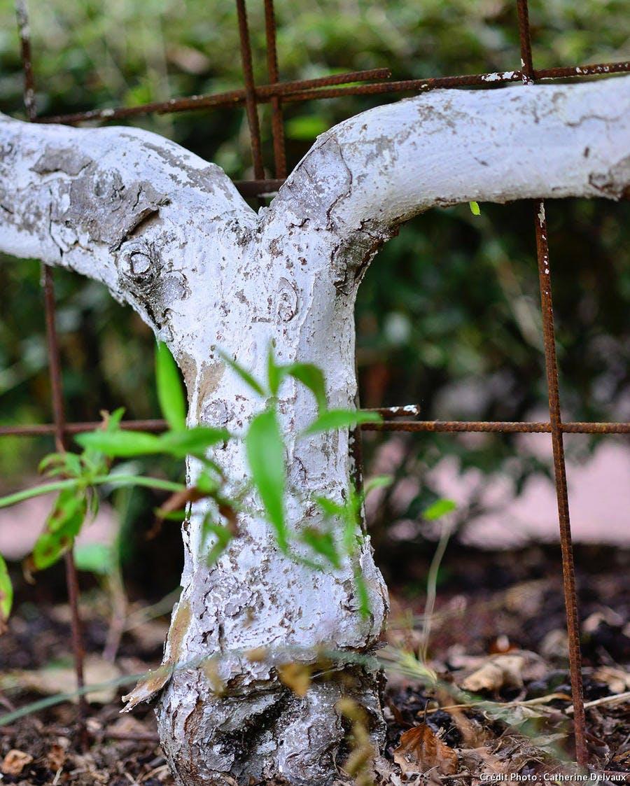 Tronc d'arbre blanchi