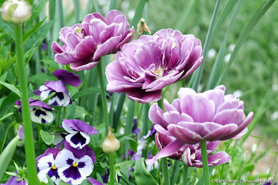 dj_tulipe_giverny2_cd.jpg