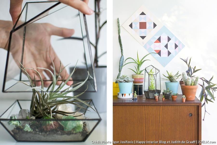 plantes vertes dans salon avec terrarium