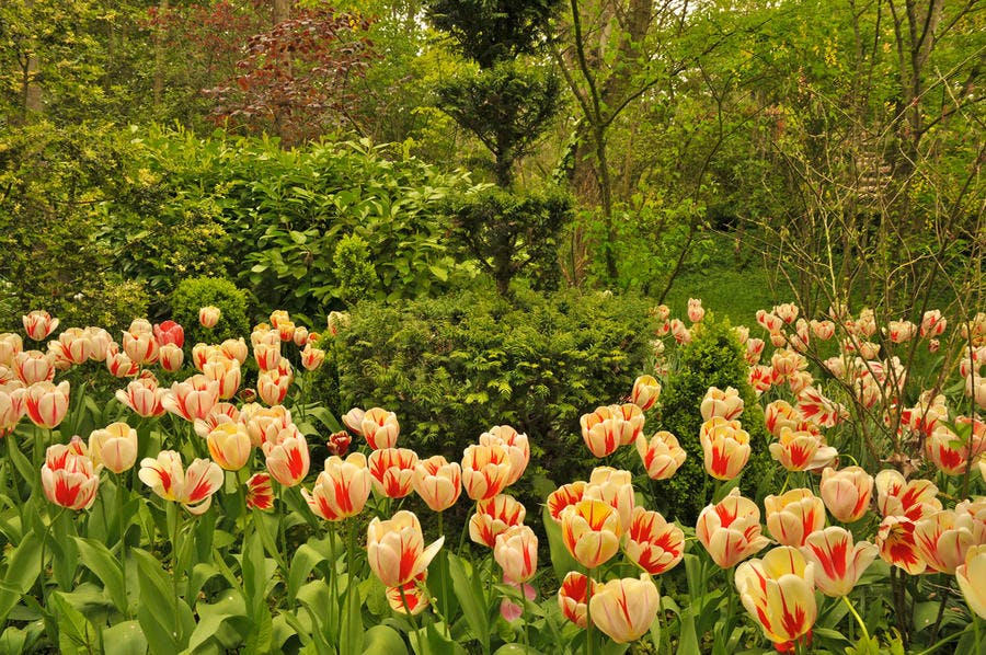 labyrinthe des champs tulipes vendeuvre
