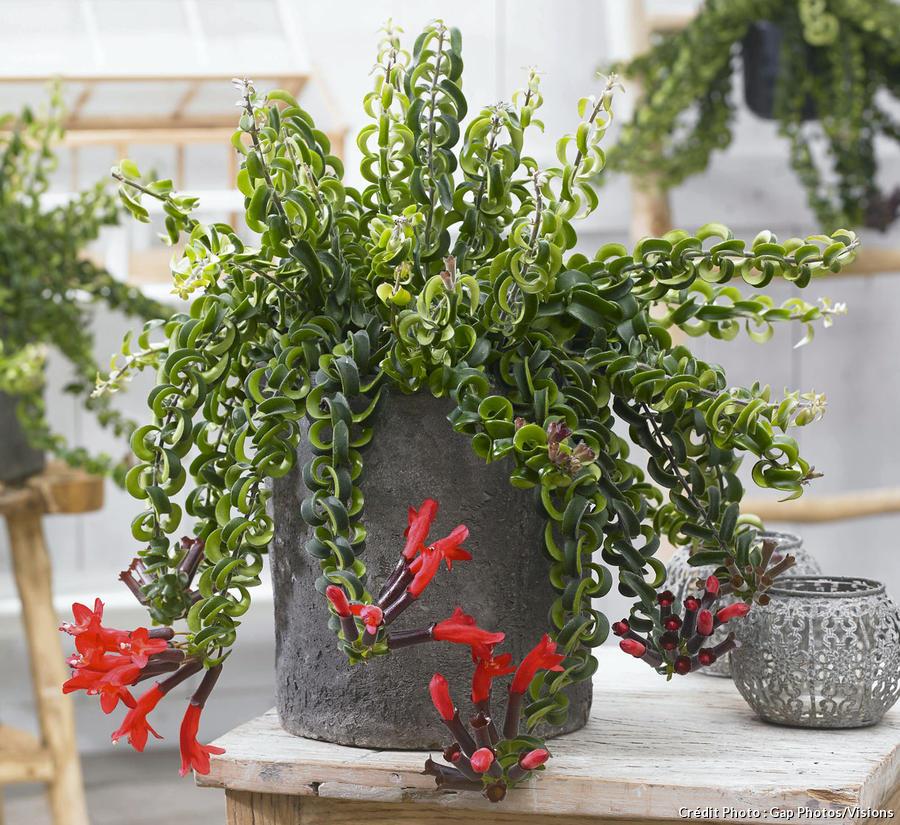 Les 12 Plantes Vertes D Interieur Les Plus Faciles Detente