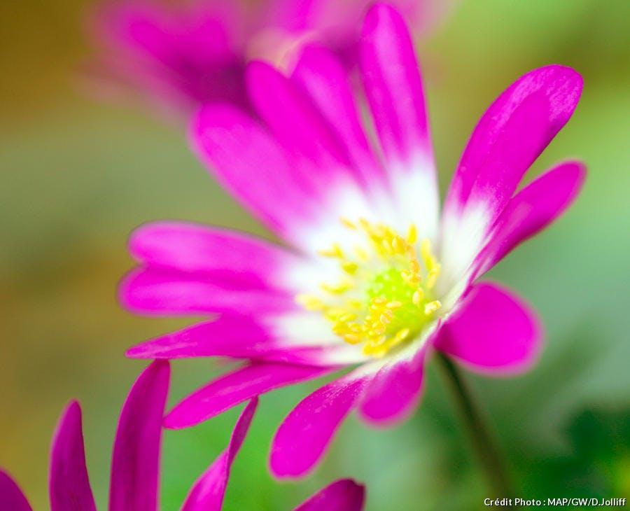 dja-anemone-blanda-radar-map-dj123.jpg