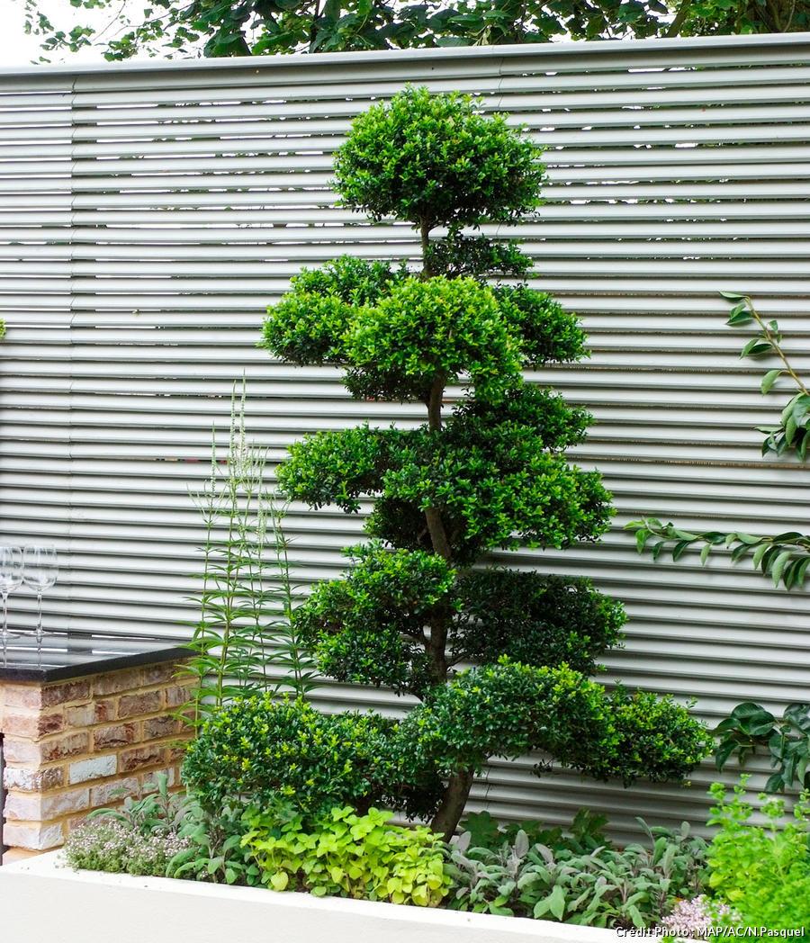 11 Idees De Brise Vue Pour Jardin Plante Haie Bambou