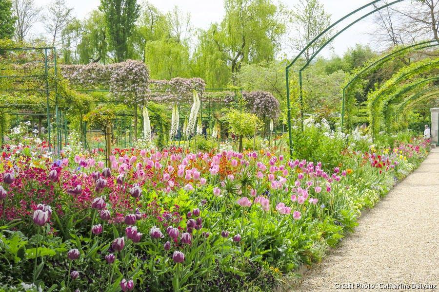 Tulipes plantées en massif