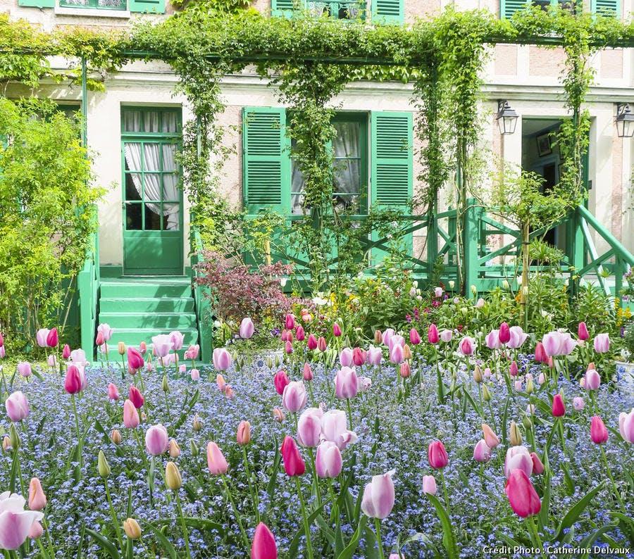 Champs de tulipes et myosotis
