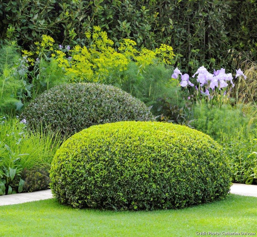 dja-creez-un-jardin-au-parfum-ditalie-buis-3suppl119.jpg