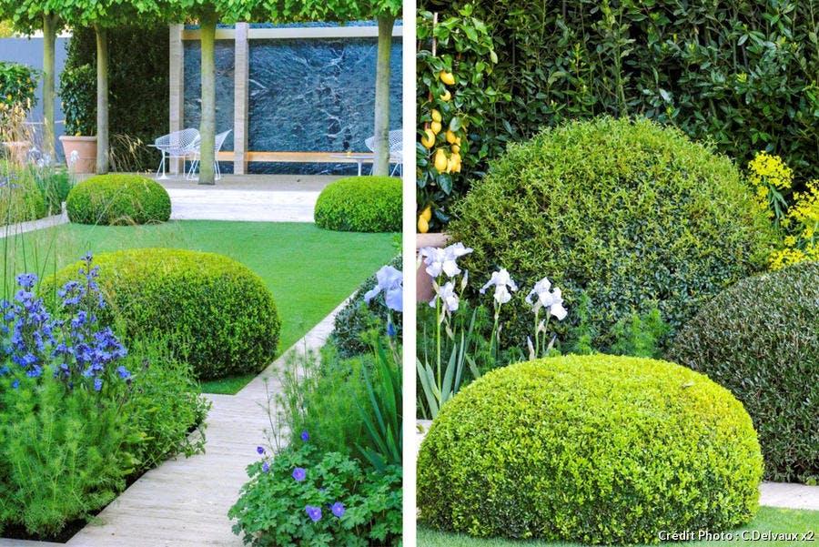 dja-creez-un-jardin-au-parfum-ditalie-buisx2-suppl119.jpg