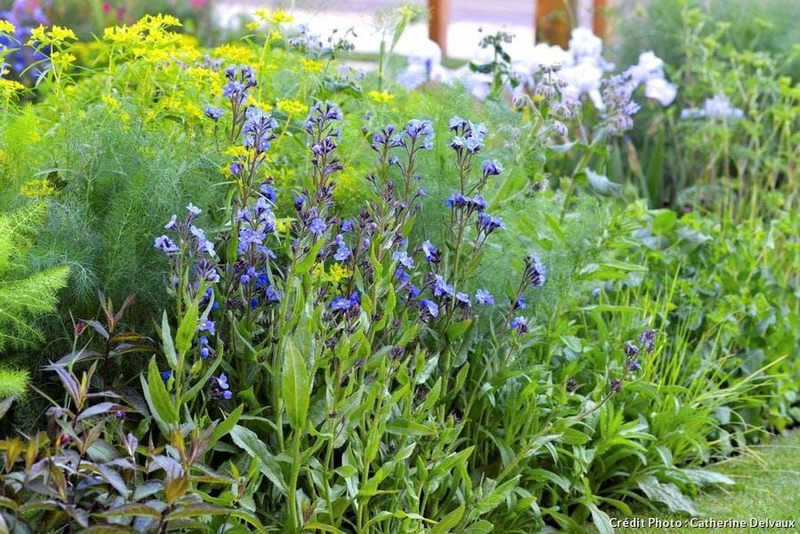 dja-creez-un-jardin-au-parfum-ditalie-magnolia-tilleul-iris-suppl119.jpg