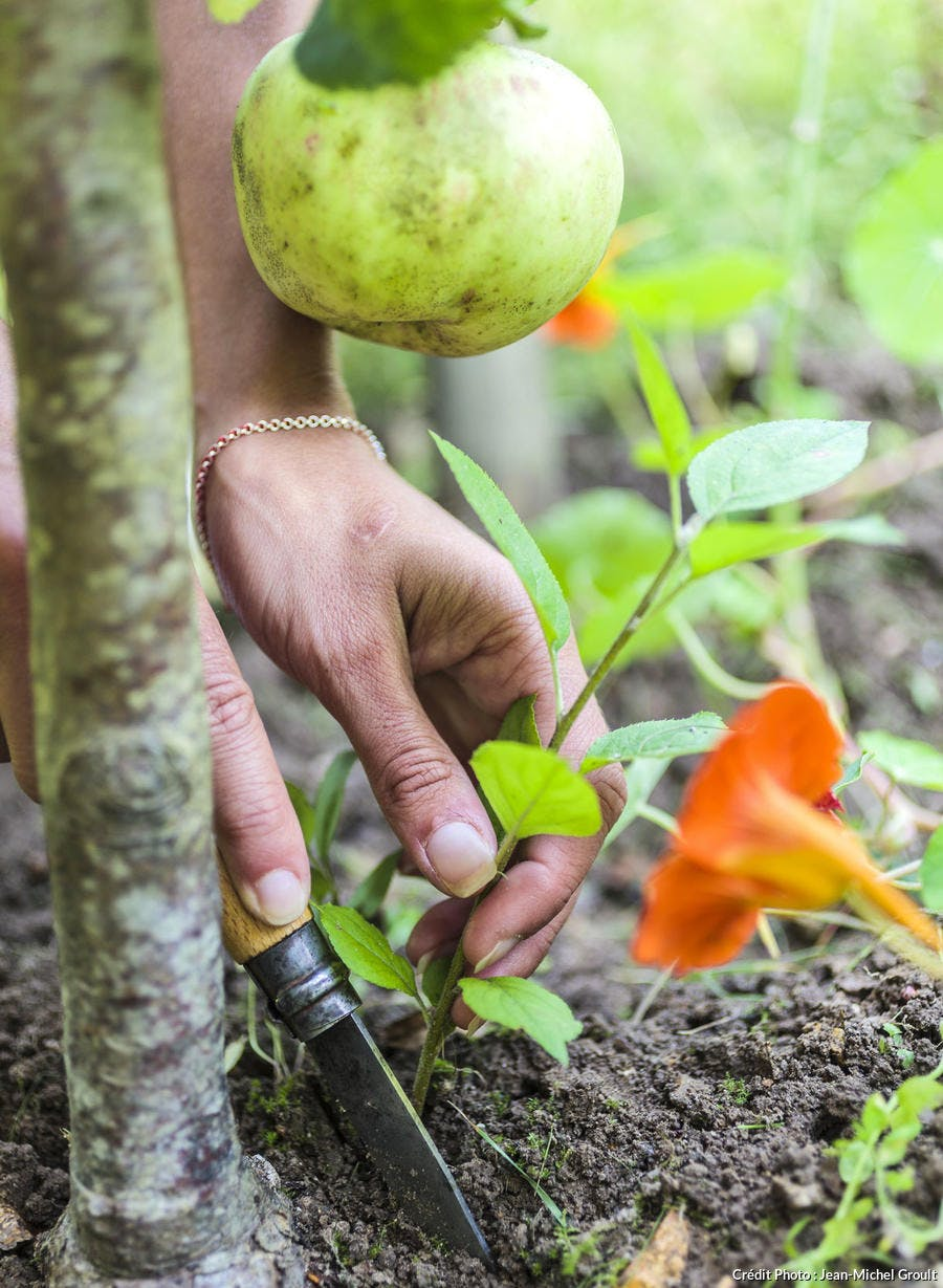 Entretenir les pieds des articles fruitiers