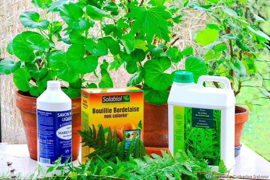 dja-geranium-pelargonium-traitement-maladies-parasites-map-c-delvaux.jpg
