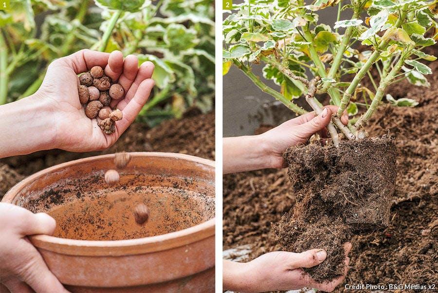 dja-geraniums-rempotage-pap-a-pas-2-b-g-medias.jpg