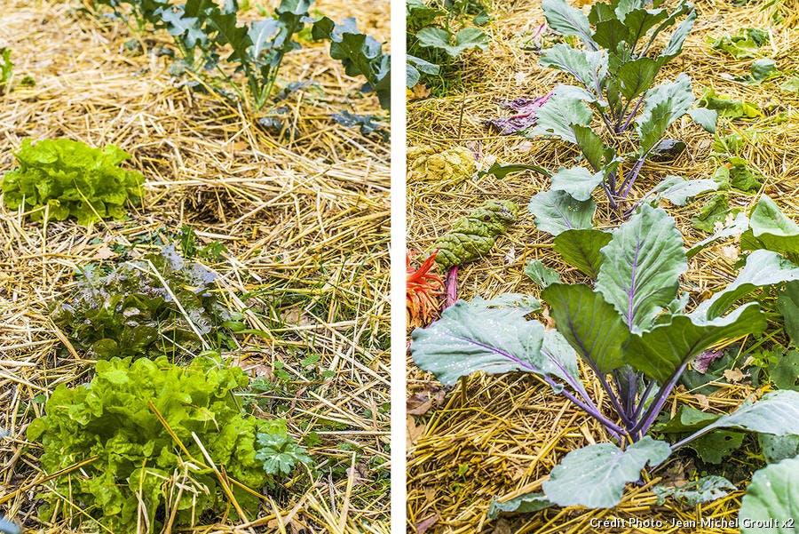 dja-hs-permaculture-a-plat-sous-conditions-jm-groult.jpg