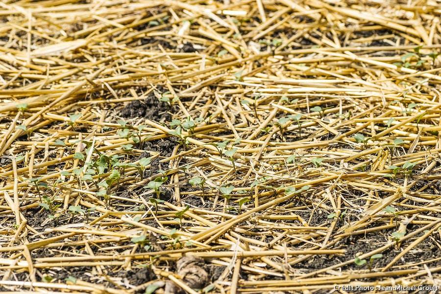 dja-hs-permaculture-semis-sur-paillis-jm-groult.jpg