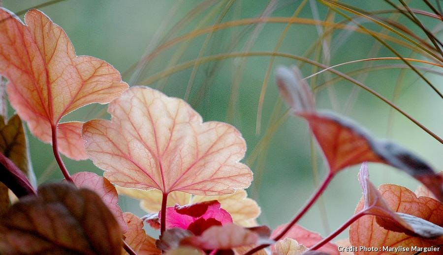 Jardinière d'automne