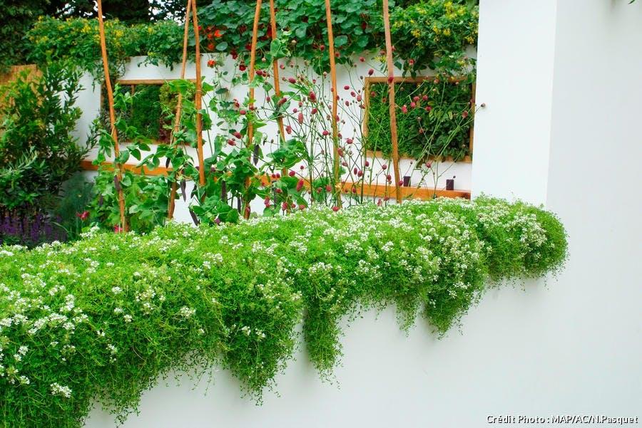 Mousse décorative sur un mur