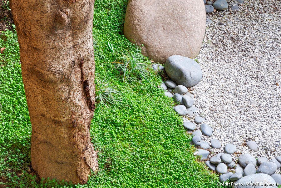 Mousse naturelle au pied d'un arbre