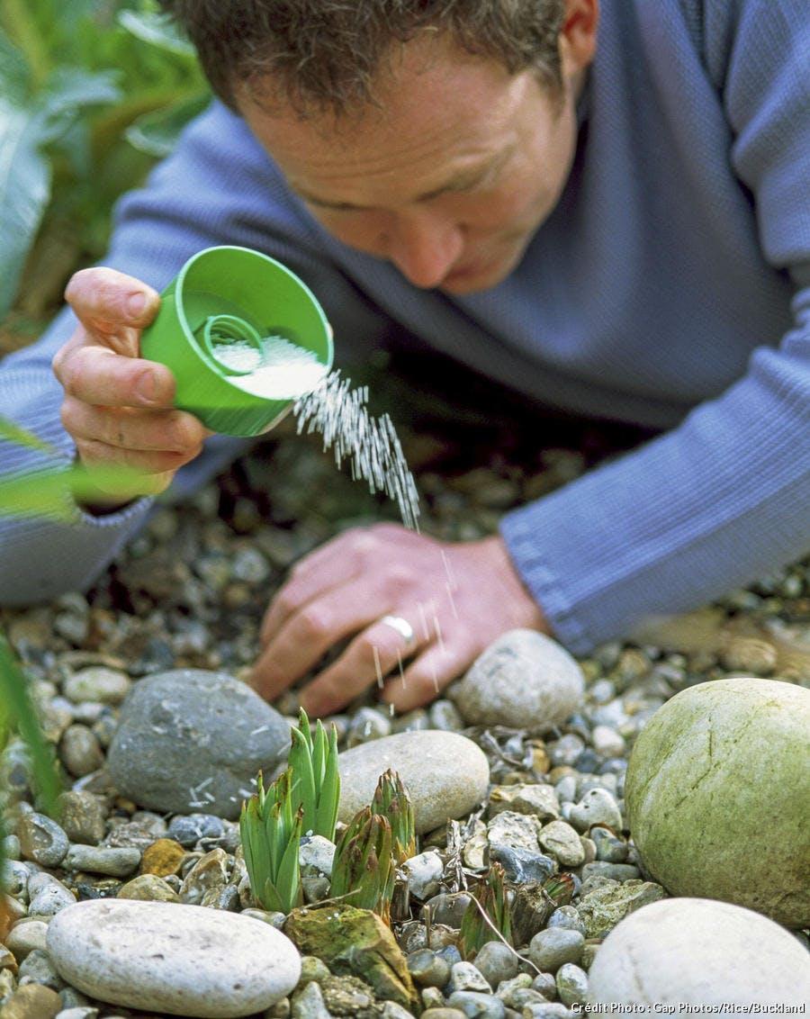 Protéger ses fleurs des limaces