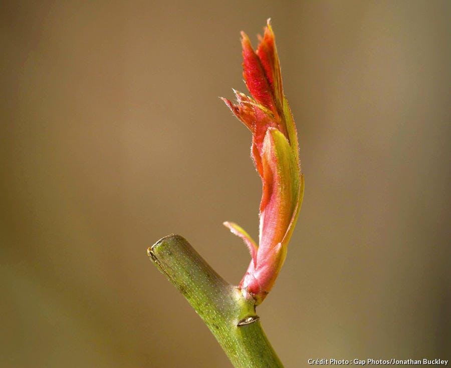 Fleurs en train de pousser