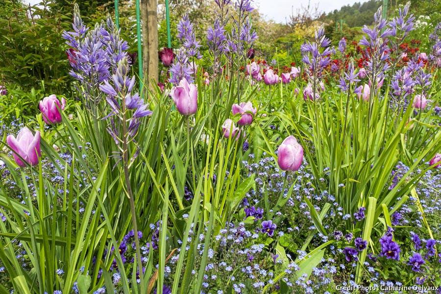 dja-planter-des-bulbes-de-tulipes.jpg