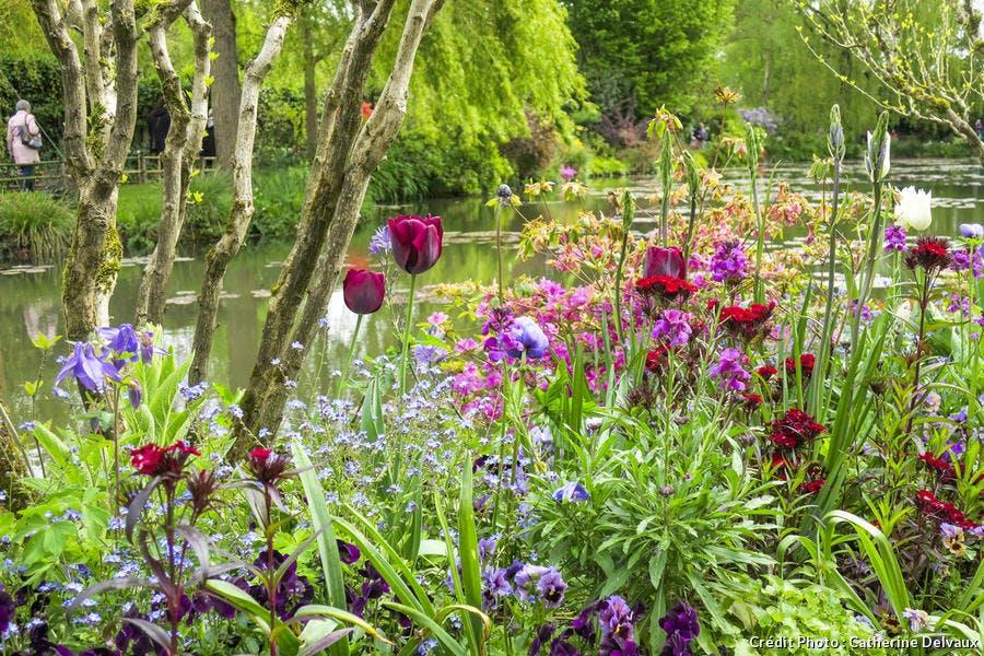 Tulipes au bord de l'eau