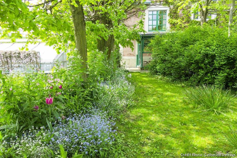 Tulipes plantées sous les arbres