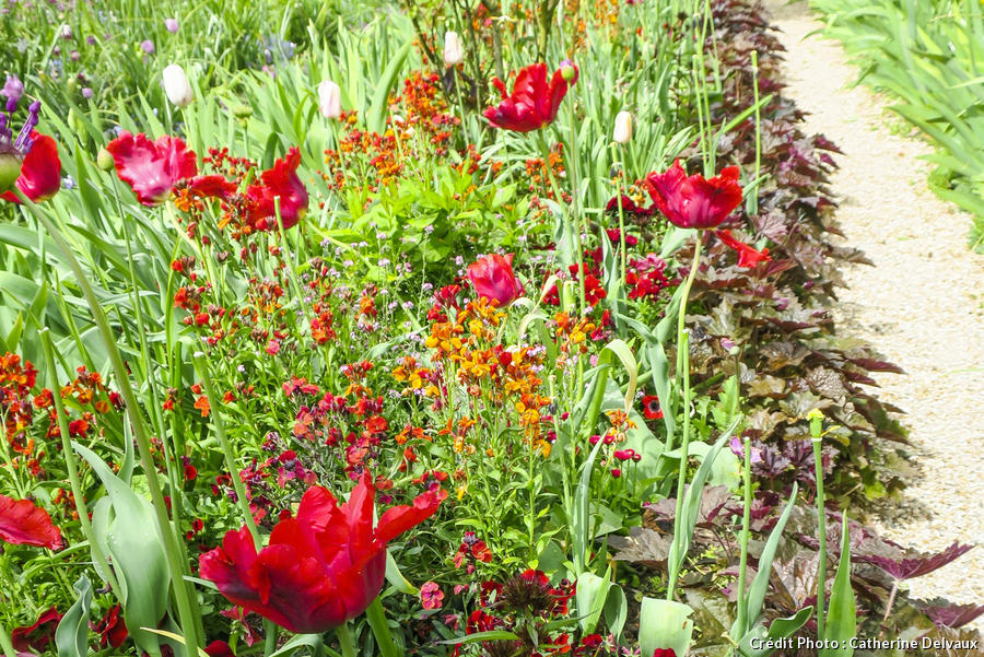Planter des tulipes en bordure