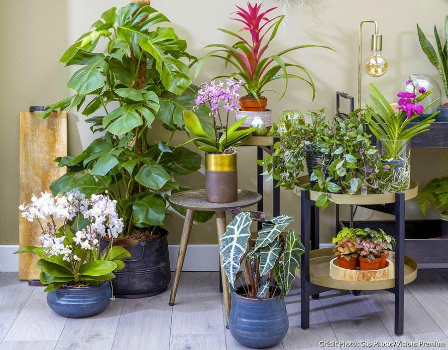 Les 12 plantes vertes d'intérieur les plus faciles ...