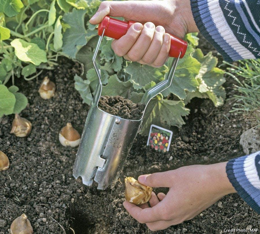 Plantoir à bulbes de tulipes